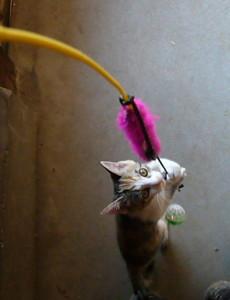 猫_20070801